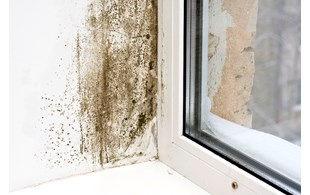 Mould near a window